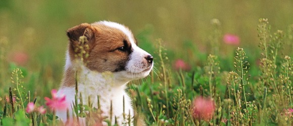 Puppy dog on flower grass field wide