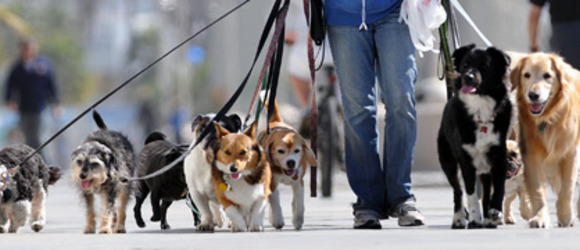 Tips for Starting a Dog Walking Business