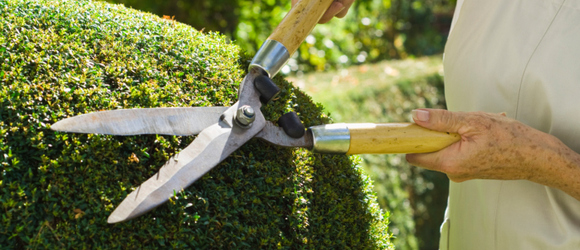 30 Possible Interview Questions for a Landscaper Interview