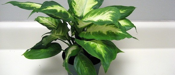 Dangerous Indoor Plants for Pets