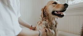 Everything You Need to Know About Dog Grooming