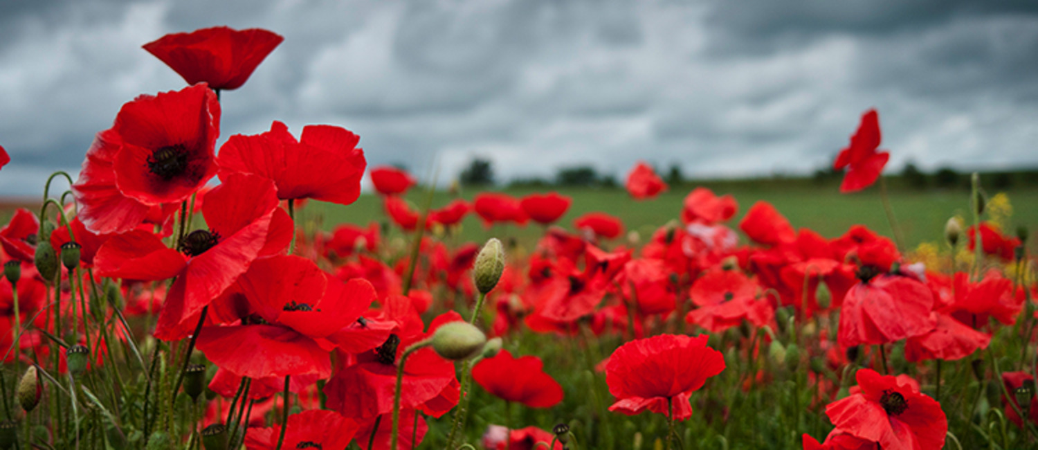 How to Explain the Importance of Remembrance Day to Kids