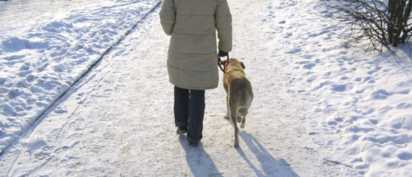 Winter Dog Walking Tips