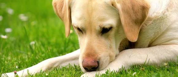 10 Most Toxic Substances for Dogs