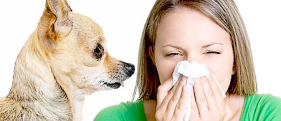 5 Best Dog Breeds for Allergy Sufferers