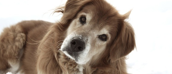 Tips for Caring for a Senior Dog