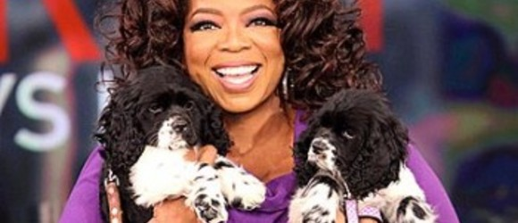The Fabulous Life Of Celebrity Pets