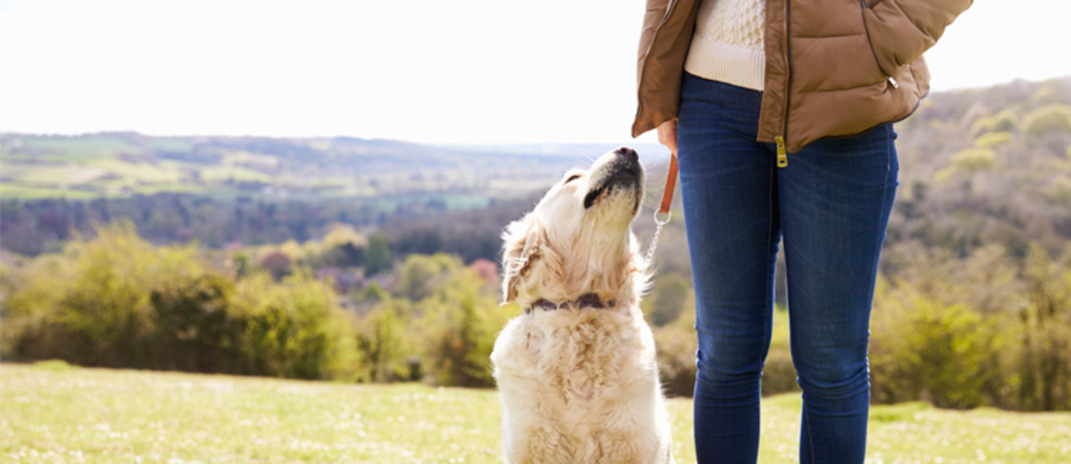 6 Ways to Improve The First Walk with an Unfamiliar Dog