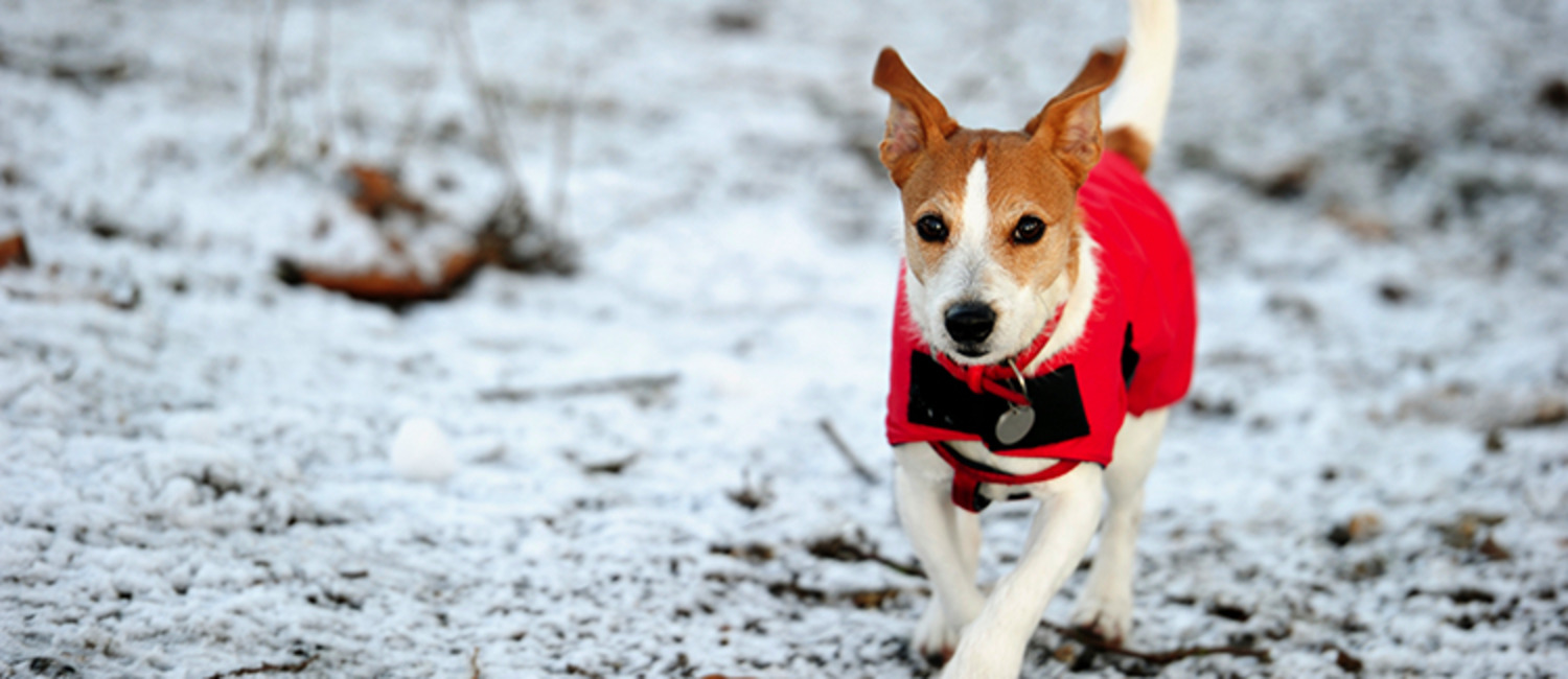 Keep Your Furry Friends Safe with These 9 Winter Pet Safety Tips