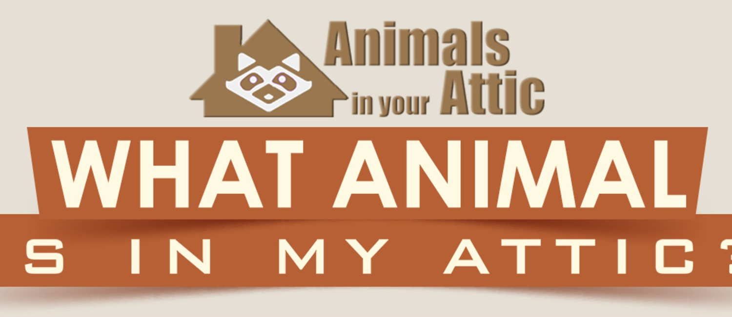 How to Figure out What Kind of Animal is in Your Attic?