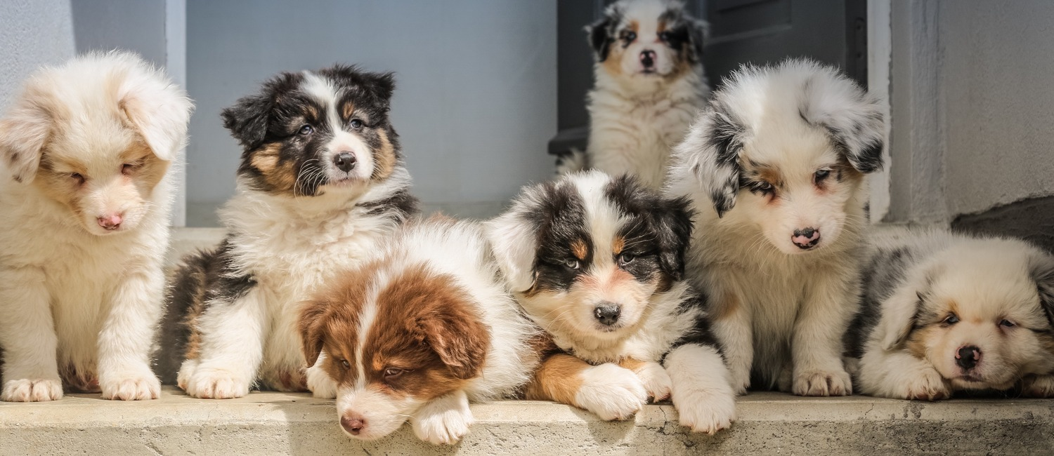 The Most Popular Puppy Names of 2019