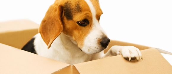 4 Tips for a Safe and Successful Move with Your Pet